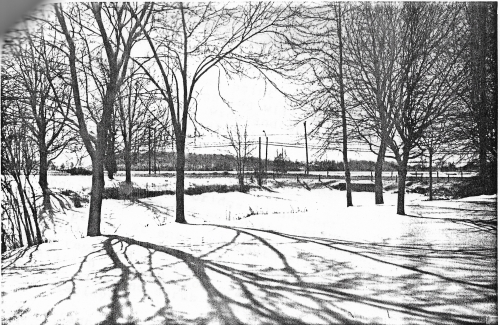 2nd W_1603_Blackadder Creek_1990